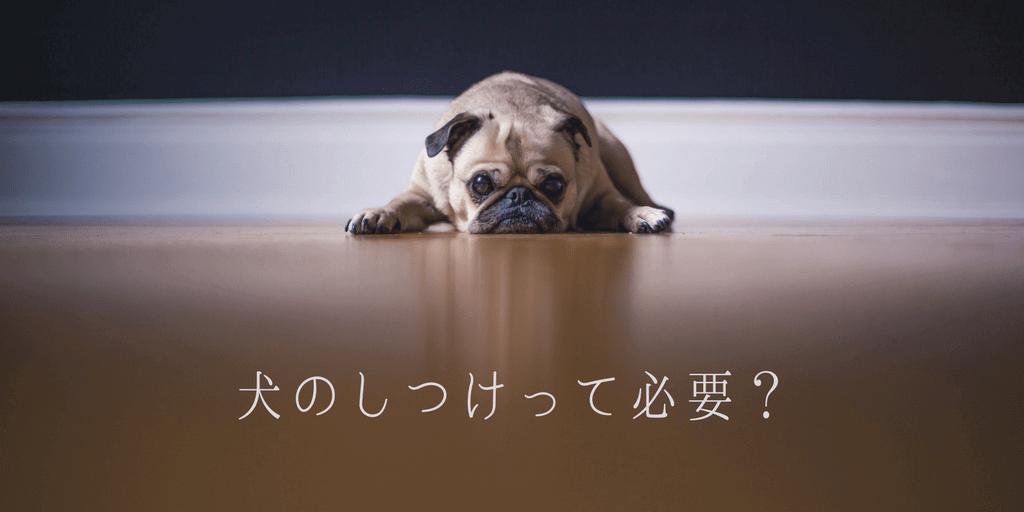 犬のしつけって必要?