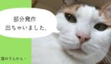 猫のてんかん