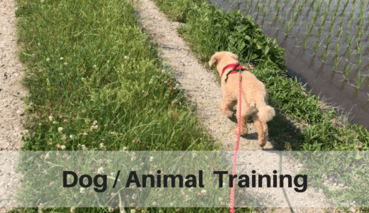 dog/animal training -sherpa pet service