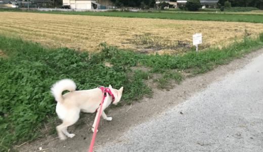 犬が人間より前を歩いてはダメ?
